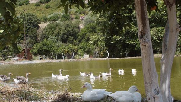 Botanical Park & Gardens Of Crete  Kids Love Greece